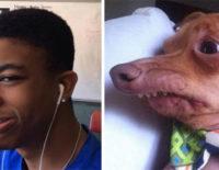 người và chó giống nhau